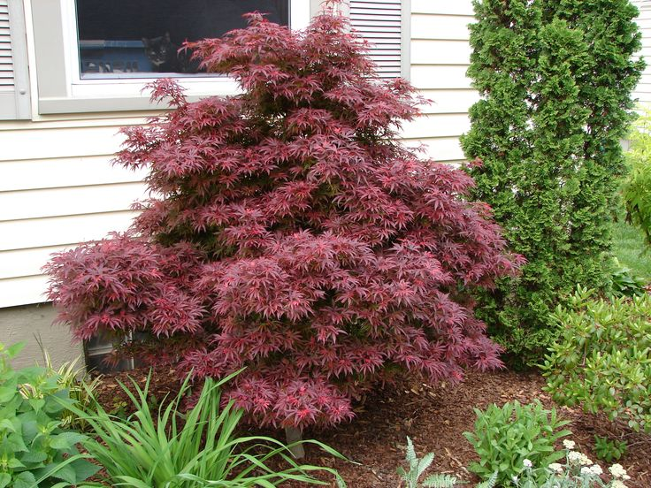 trees and shrubs landscaping