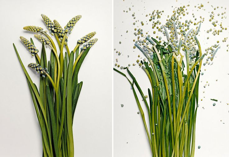 Flowers Soaked in Liquid Nitrogen Shattered Into Pieces | DeMilked