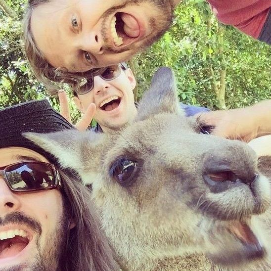 DELETE - Animals, Animals |The Kangaroo selfie and the 11 other best animal photobombs of all time | Comedy Central