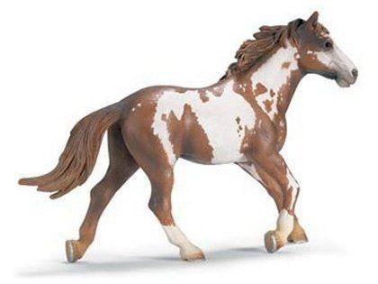 Horse: Pinto Stallion