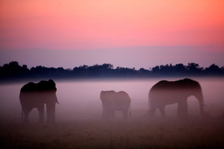 Amanecer de elefantes