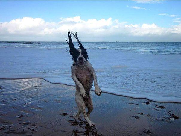 20 самых комичных снимков собак, сделанных в нужный момент в нужном месте. Смеха не сдержать!