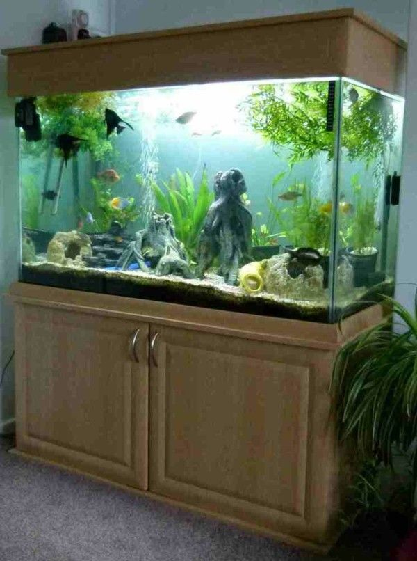 25 best ideas about aquarium cabinet on pinterest fish for Easy aquarium fish