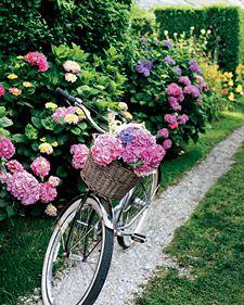 NantucketWicker Baskets, Gravel Path, Vintage Bikes, Gardens, Martha Stewart, Bikes Riding, Pink Hydrangea, Beach Cruiser, Flower