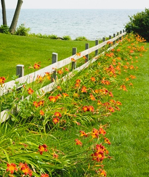 Lilies as border along fence by the lake :)  u can dig these up for free along roadside thru va