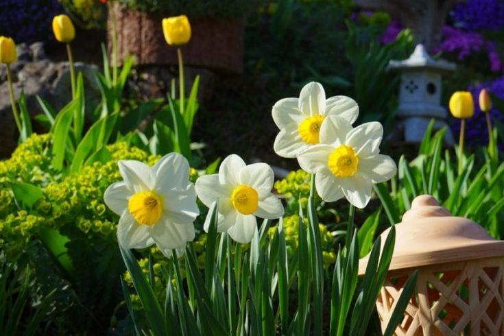 5 lépésben megmutatjuk, hogyan ültesd el szeptemberben-októberben a virághagymákat, hogy tavasszal szomszédpukkasztó virágszőnyeggel takarják be a kertet. Íme, itt következnek a hagymások ültetésének alapjai.