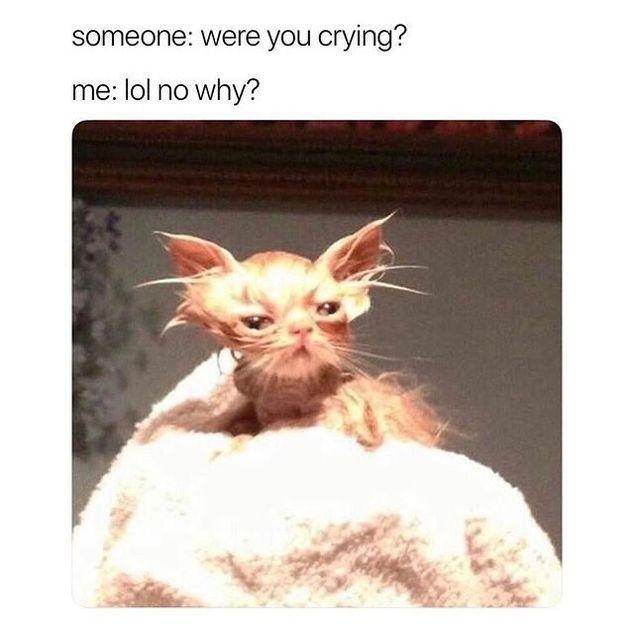 50 Fresh Memes For Today 594 Funnyfoto Animal Memes Funny Animal Memes Funny Cat Memes