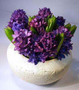 Jacek Jacenty Hiacynt  oznacza kwiat hiacynta , Hyacinthe Giacinto Jacinto Jacinda Jacinta -name of the hyacinth flower more behindthename.com Greek myth mitologia grecka