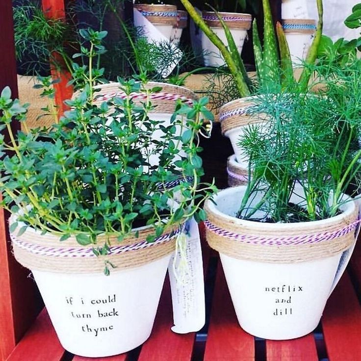 These plant pun pots are really starting to grow on us...(#regram @eastcoastcreative | @plant_puns) #planters #plantpuns