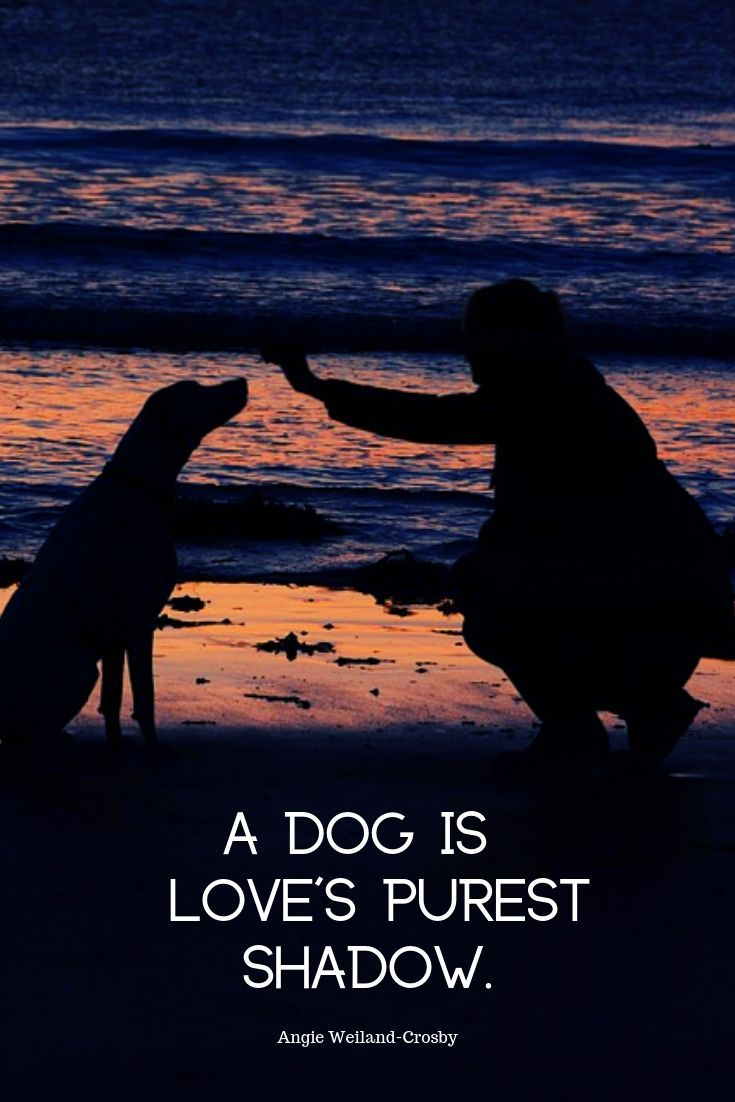 Dog Mom Love Letter To A Lab Dog Best Friend Quotes Cute Animal Quotes Dog Quotes