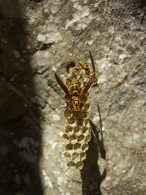 Pequeño panal de #avispas. #nature, #naturaleza, #photography, #fotografia, #animales, #animals