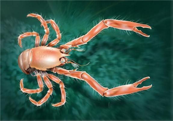New Squat Lobster Discovered