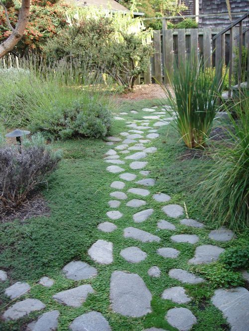 Creeping Thyme Thymus In Pathway Stone Pavers In Drought