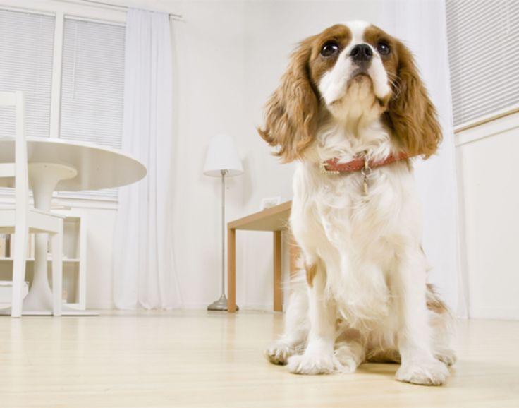Hondenharen en kattenharen verwijderen | #flairNL