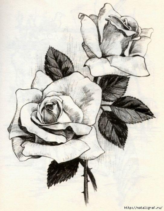 Мобильный LiveInternet Нарисовать розу   чего-ты-хочешь - Дневник чего-ты-хочешь  