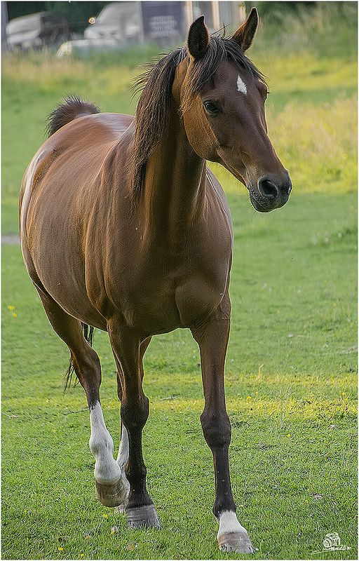 horse by Marian Ro**