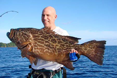 Image from http://www.coibadventure.com/images/broomtail-grouper.jpg.