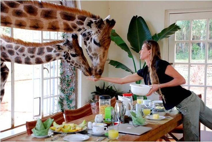 Giraffe Hotel at Breakfast