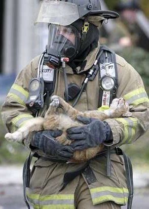Rescued kitty.: Cats, Animal Lovers, Heart Of Gold, Fireman Save, True Heroes, Firefighters Rescue, Real Men, Fire Fighter, Firefighters Heroes