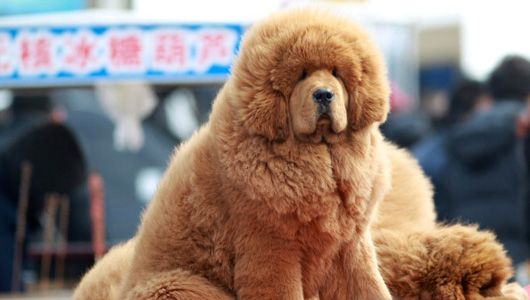 16 best #Dogs That Loo...