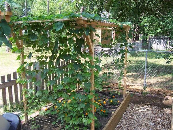 Trellis design question home brew forums gardening for Hops garden designs