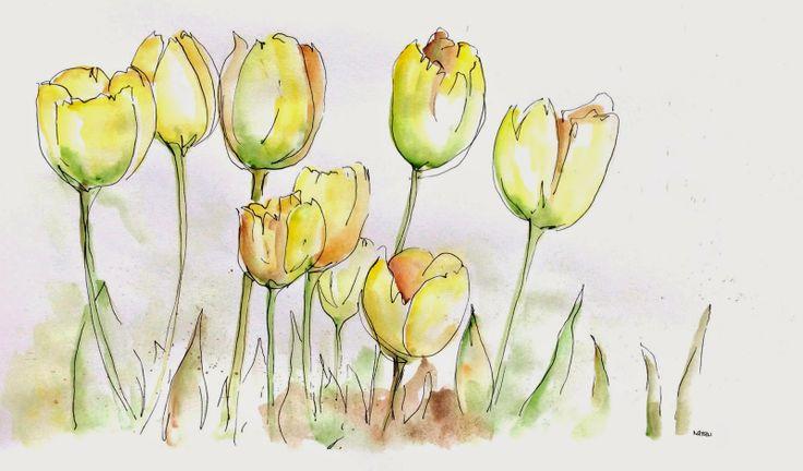 Tulipas / Tulips