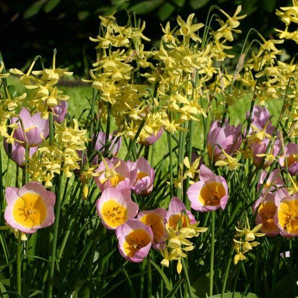 Die besten 25+ ungewöhnliche Pflanzen Ideen auf Pinterest - kies garten gelb
