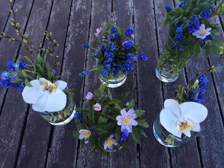 Herkkiä alkukevään kukkia. Suurimmaksi osaksi luonnosta. Asetelmat on tehty erilaisiin laseihin.