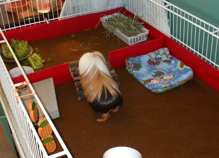 118 best guinea pig cage ideas cavy diy images on pinterest