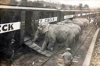 Elephants from the Wirths Bros Circus at Bulli station 1923
