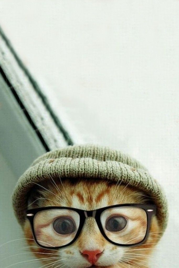 When a Cat Have Hipster Style: Cute Cats ~ frauenfrisur.com hipster accessories ... iPhone X Wallpaper 568790627909912438 7