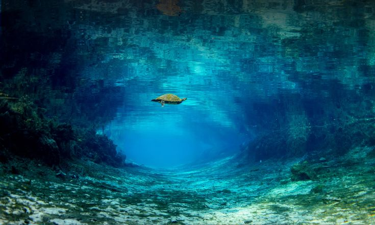 Home - Ginnie Springs