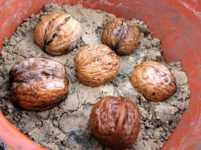 Вкусные грецкие орехи — Все для дома и дачи