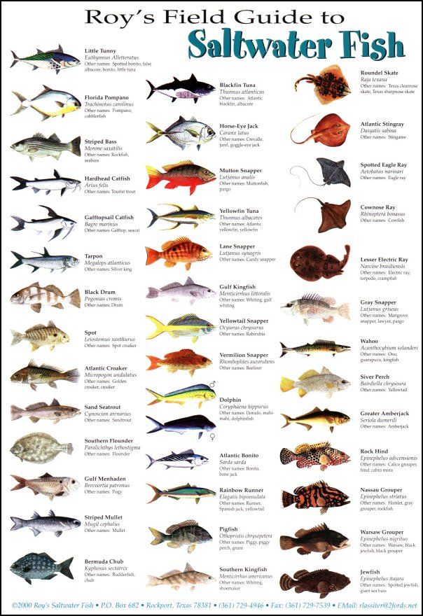 96 best fish identification images on pinterest animales for Best time to go saltwater fishing