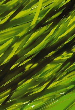 Algues, health // France, Bretagne Kristály Szépségszalon http://www.kristalyszepseg.info/