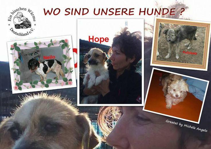 WO SIND UNSERE HUNDE ??  Info : http://blog.micheleangelo.de/   #Tierschutz #Tiere  #Tierrettung  #Rumänien #Notfall #Strays #Tierheim #Shelter #Europa