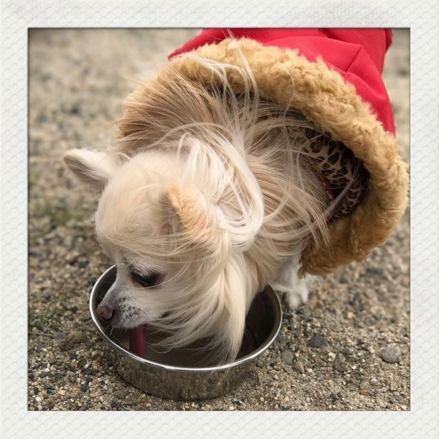 @zitakusuisosui  我が家のアイドル🐶ちぃちゃん💓 いつまでも長生きしてね😌 * #ペットの贅沢水素水 #犬 #猫 #水素水 #ミネラルゼロ #九州 #熊本 #動物看護士 #ドッグライフアドバイザー #動物病院 #皮膚病 #アレルギー #愛犬 #愛猫 #かわいい #ドッグフード #キャットフード #サプリメント #サプリ #水素サプリ #新日本水素 #monipla #新日本水素ファンサイト参加中