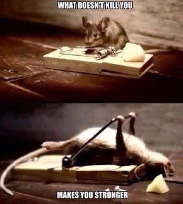 Zat Racun Tikus Sebagai Zat Berbahaya, Hati-Hati Jangan Sampai Tertelan