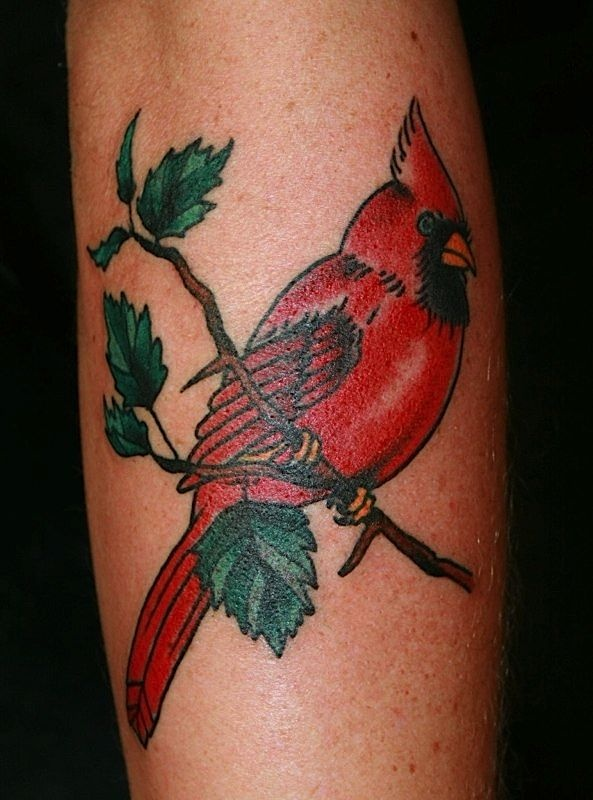 1000 images about tree tattoos cardinal tattoos on pinterest for Small cardinal tattoo