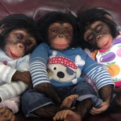 Monkey, monkey, monkey :0)