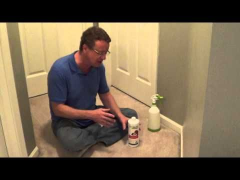 How To Get Cat Pee Out Of Carpet, Cat Spray, Remove Cat Urine From Carpet, Get Rid Of Cat Smell - YouTube