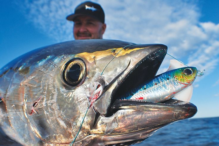 Fish Species, Lure Fishing, bluefin tuna fishing, jigging, Shimano, tuna fishing, yellowfin tuna fishing.