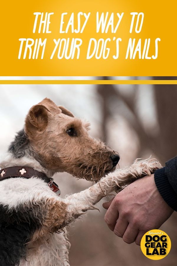 The Easy Way To Trim Your Dog S Nails Dog Nails Dog Training Dog Training Obedience