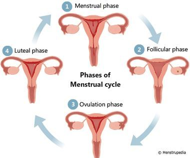 Menstrupedia - Your guide to healthy periods