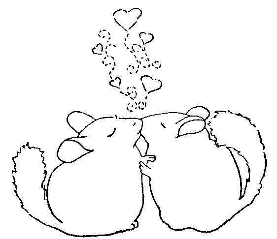 34 best images about chinchilla stuff for humans on for Chinchilla coloring pages to print