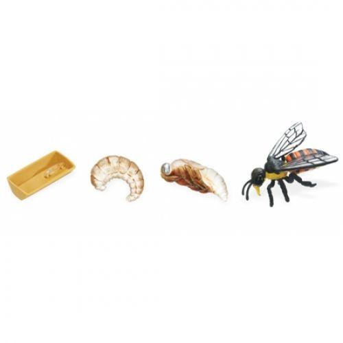 Honey Bee Life Cycle Stage Figures - Bee Life Cycle Figurines