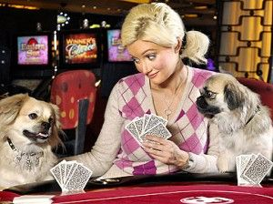 17 best images about gambling pets on pinterest casino for James madison pets