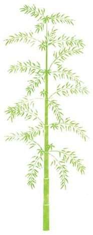 Large Bamboo Tree Wall Stencil