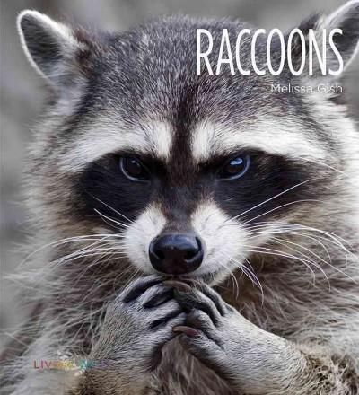 Best 25 raccoons ideas on pinterest racoon raccoons for Do raccoons eat fish