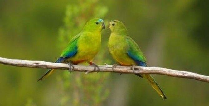Gli uccelli - birds